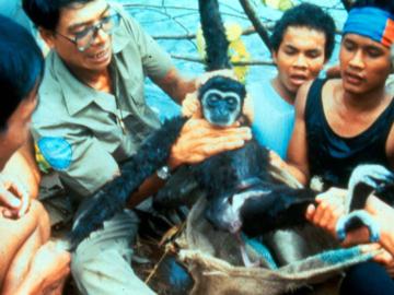 การเดินทางไปเขื่อนเชี่ยวหลานครั้งแรกเพื่อช่วยเหลือชีวิตสัตว์ป่ากับ สืบ นาคะเสถียร เมื่อ 30 ปีก่อน