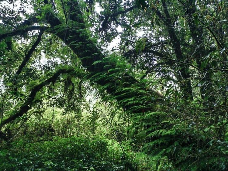 ซวาโข่ ผืนป่าชุมชนจากการคืนชีวิตสู่ผืนดินของชาวปกาเกอะญอผู้วายชนม์ จนเกิดเป็น ป่าต้นน้ำ