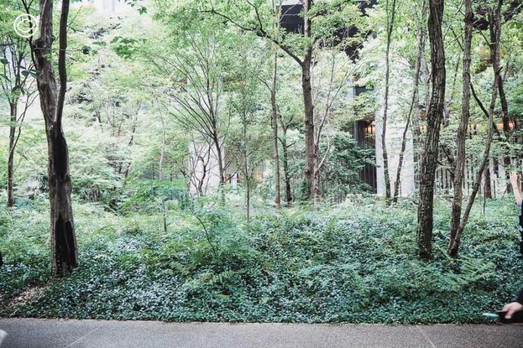 การออกแบบพื้นที่สีเขียวใจ กลางย่านธุรกิจของ ญี่ปุ่น ที่ทำให้นกและผีเสื้อบินไปมาระหว่างสวนได้