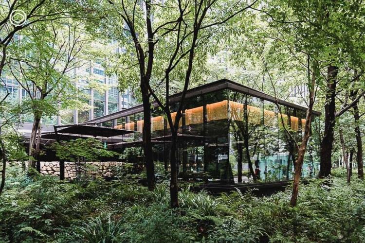 The Café by Aman  การออกแบบพื้นที่สีเขียวใจกลางย่านธุรกิจของ ญี่ปุ่น ที่ทำให้นกและผีเสื้อบินไปมาระหว่างสวนได้