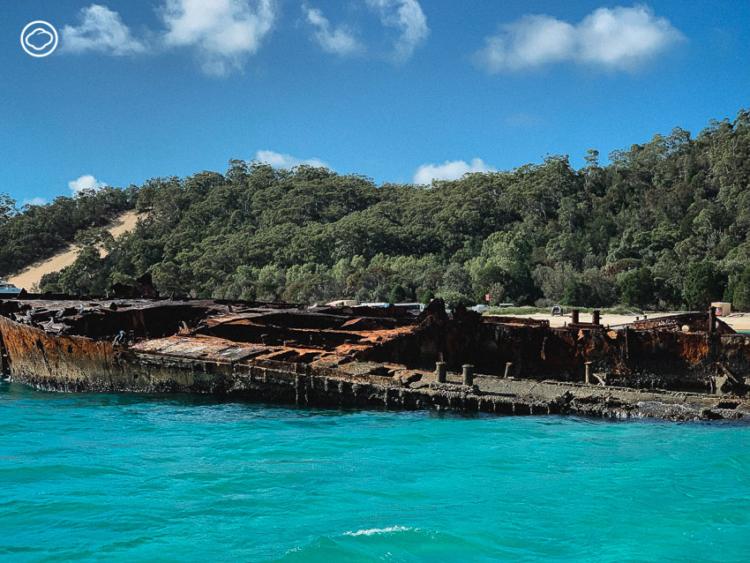 เดินเล่นเลียบแม่น้ำ บริสเบน ออสเตรเลีย  ทำกิจกรรมกลางแจ้งบนพื้นที่ 100 กว่าไร่ แวะไปอุ้มโคอาล่าและล่องเรือเฟอร์รี่ไปให้อาหารโลมา