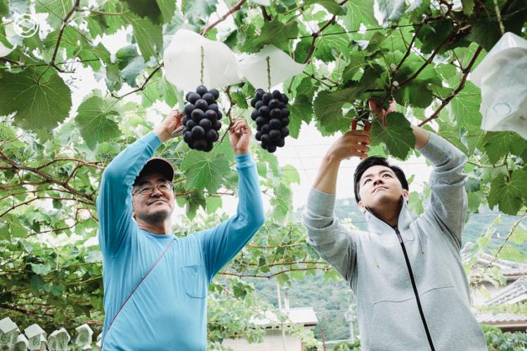 Takami Farm ไร่องุ่นแห่งอุเอดะที่สืบทอดเคล็ดลับการปลูก องุ่นเคียวโฮ จากสมุดบันทึกของคุณปู่