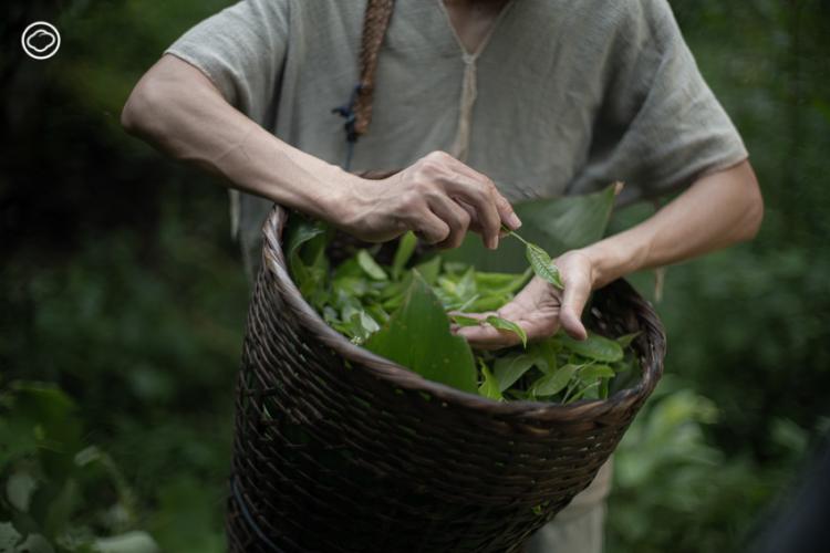 ฌานา ร้านอาหารเพื่อสุขภาพที่เสาะหาวัตถุดิบดีที่สุดจากเพื่อนเกษตรกรมาปรุงเป็นเมนูรสอร่อย
