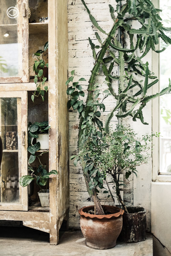 10 วิธีดูแลต้นไม้ ในร่มให้อยู่รอดและสวยเหมือนตอนซื้อจากร้านสำหรับนักปลูกมือใหม่