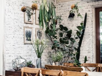 10 วิธีดูแลต้นไม้ในร่มให้อยู่รอดและสวยเหมือนตอนซื้อจากร้านสำหรับนักปลูกมือใหม่