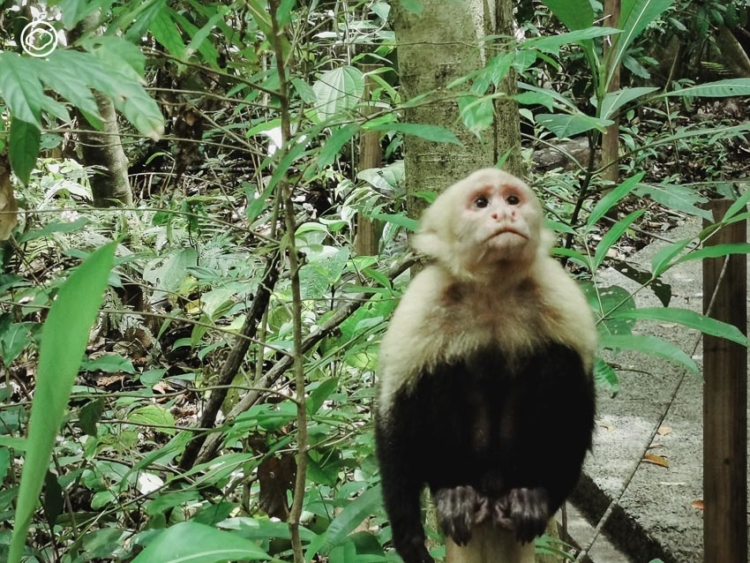 ดูงาน Costa rica ตัดงบทหารมาพัฒนาประเทศ จนมีสัดส่วนป่าสงวนมากสุดในโลก และระบบสาธารณสุขดีสุดในอเมริกากลาง