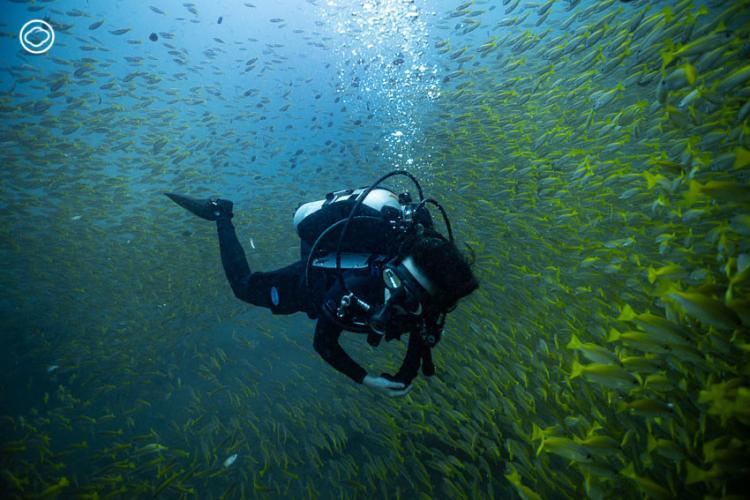 เรื่องเล่าจากใต้น้ำของระยะความสัมพันธ์ระหว่างแม่หมึกหอมกับ ช่างภาพใต้น้ำ ที่แลกความไว้ใจด้วยเวลา