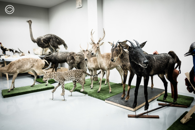 กองวัสดุอุเทศพิพิธภัณฑ์ธรรมชาติวิทยา