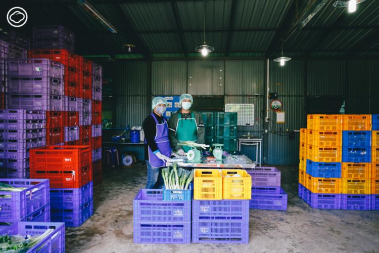 เกษตรกรคนแรกของ สหกรณ์ผักปลอดภัยภูทับเบิก ที่หันมาทำเกษตรอินทรีย์จนได้ใบรับรองมาตรฐานเกษตรอินทรีย์