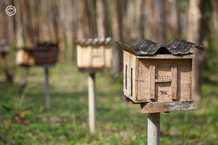 ชุมชนมุสลิมเก่าแก่ ไหนหนัง ที่แข็งแกร่งได้ขณะราคายางตกด้วย การเลี้ยงผึ้ง ในป่าชายเลนและรักษ์ทะเล