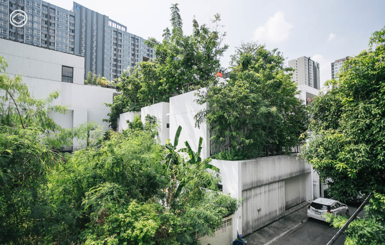บ้านของภูมิสถาปนิกที่ปลูกต้นไม้บนบ้านกว่า 150 ต้นจน Google Maps มองเป็นสวนไม่ใช่บ้าน