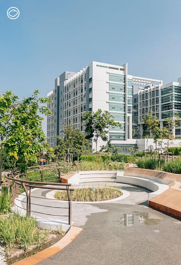 อุทยานเรียนรู้ป๋วย 100 ปี สวนแห่งใหม่ของธรรมศาสตร์ที่เป็น Green Roof Urban Farm ใหญ่สุดในเอเชีย