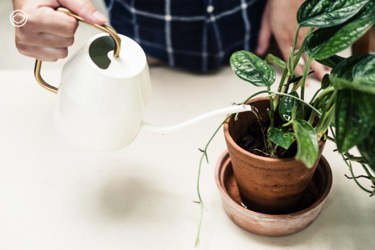บัวรดน้ำ, วิธีรดน้ำต้นไม้