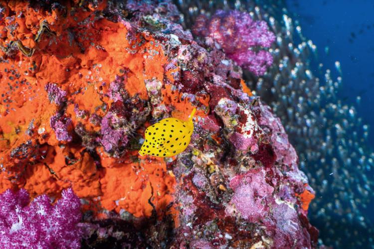 ฉลองปีใหม่ใต้น้ำ ดำน้ำสำรวจแนวปะการังก่อนเที่ยงคืนที่กองหินริเชลิว ชายฝั่งทะเลอันดามัน