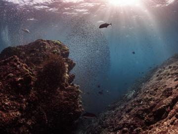 ฉลองปีใหม่ใต้น้ำ ดำน้ำสำรวจแนวปะการังก่อนเที่ยงคืนที่หาดกะตะ