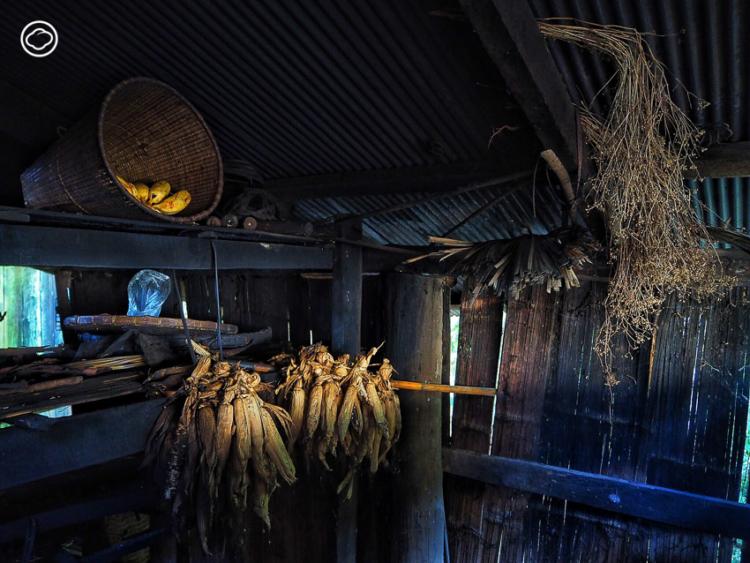 ตามหาสายพันธุ์ พริกกะเหรี่ยง บ้านแม่กองคาในหมู่บ้านกลางป่าที่ตั้งมาก่อนกรุงรัตนโกสินทร์ถึง 80 ปี