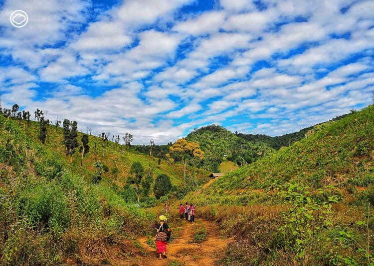 ตามหาสายพันธุ์พริกกะเหรี่ยงบ้านแม่กองคาในหมู่บ้านกลางป่าที่ตั้งมาก่อนกรุงรัตนโกสินทร์ถึง 80 ปี