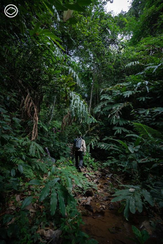 ปีนกระบะไต่ขึ้นเขาไปเดินเส้นทางเดินป่าศึกษาธรรมชาติเรียนรู้ป่าต้นน้ำเหนือไร่ชาที่ เชียงราย