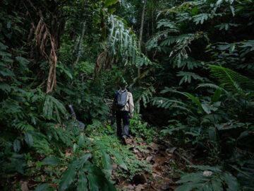 ปีนกระบะไต่ขึ้นเขาไปเดินเส้นทางเดินป่าศึกษาธรรมชาติเรียนรู้ป่าต้นน้ำเหนือไร่ชาที่เชียงราย