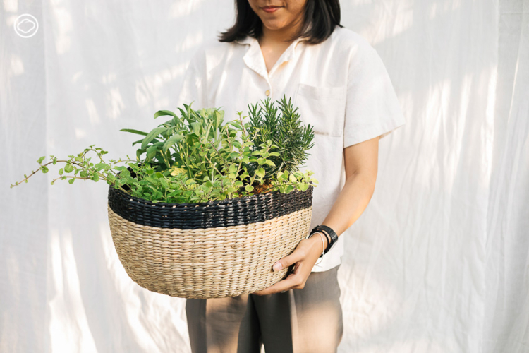 6 ต้นไม้ แทนใจที่เหมาะจะมอบให้กันแทนช่อดอกไม้ในวันแห่งความรัก, พืชสมุนไพร, วาเลนไทน์