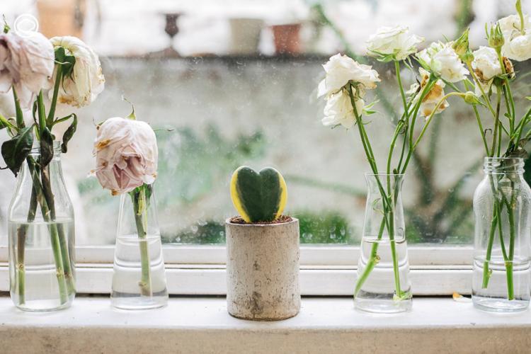 6 ต้นไม้ แทนใจที่เหมาะจะมอบให้กันแทนช่อดอกไม้ในวันแห่งความรัก, โฮยา, วาเลนไทน์