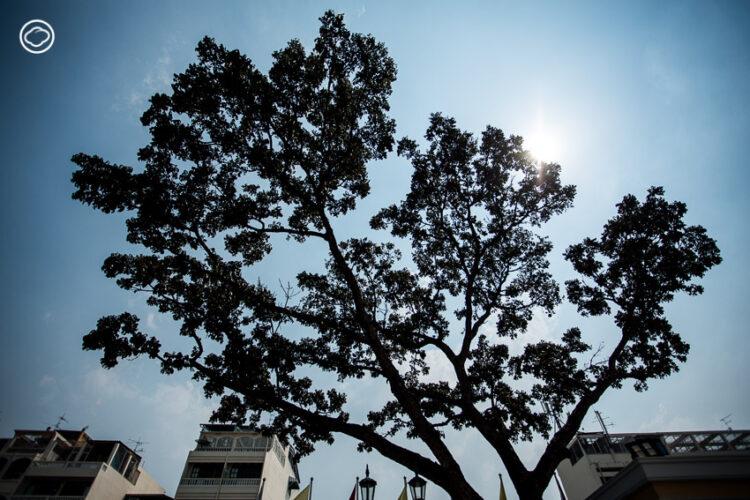 ภารกิจใหญ่หน้ากระทรวงกลาโหมของ BIG Trees ผู้มองเห็นว่า 'ที่จริงแล้วต้นไม้ในเมืองมันมีปัญหาทั้งนั้น'