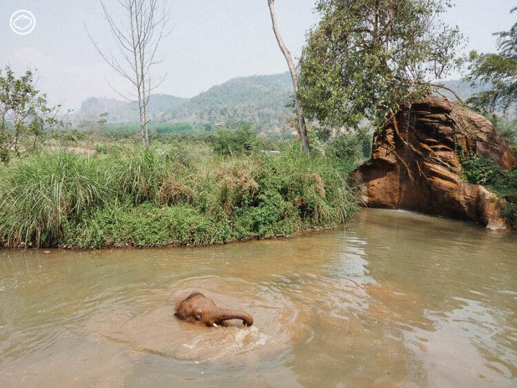 ไปใช้ชีวิตกับช้าง ใน  Elephant Green Hill ปางช้างที่มีรูปแบบการท่องเที่ยวใหม่ให้คนก็แฮปปี้ ช้างก็แฮปปี้