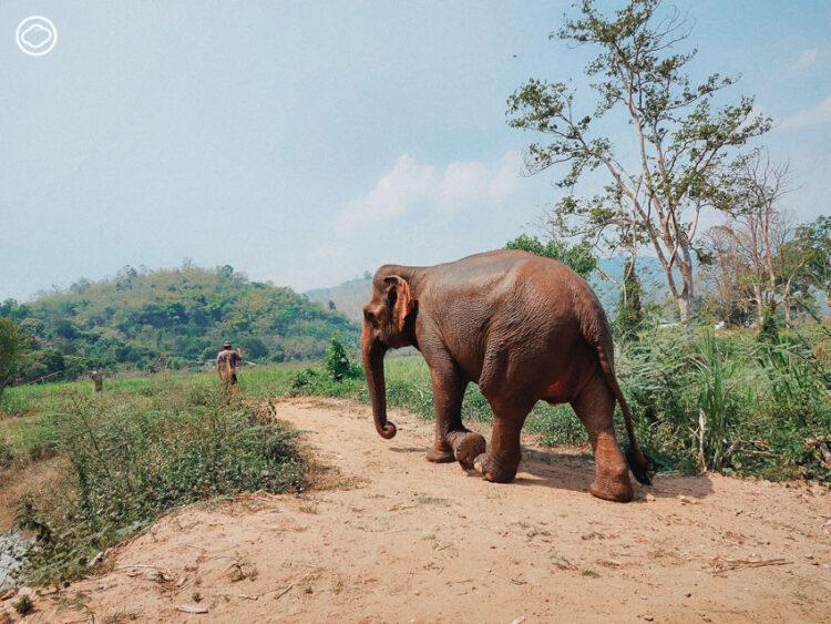 ไปใช้ชีวิตกับช้าง ในปางช้างที่มีรูปแบบการท่องเที่ยวใหม่ให้คนก็แฮปปี้ ช้างก็แฮปปี้