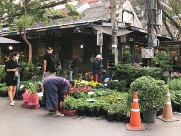 18 เคล็ดลับการเดินซื้อต้นไม้ใน ตลาดต้นไม้จตุจักร แบบเซียนต้นไม้