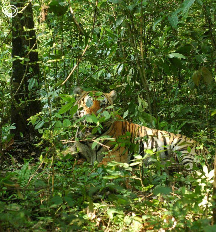 ธรรมชาติ ห้องเรียนตลอดชีวิตของ ม.ล.ปริญญากร ช่างภาพสัตว์ป่าและธรรมชาติชั้นครู