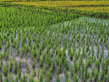 10 ปีแห่งการพิสูจน์ของชาวบ้านตำบลสงเปือย จังหวัดยโสธร ว่าเกษตรอินทรีย์ไม่ใช่เรื่องเพ้อฝัน