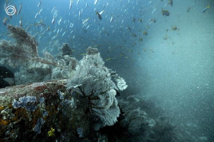ดำน้ำใต้พายุกระแสน้ำขุ่นและ IOD ปรากฏการณ์อุณหภูมิน้ำเปลี่ยนรุนแรงสุดใน 60 ปีที่สิมิลัน