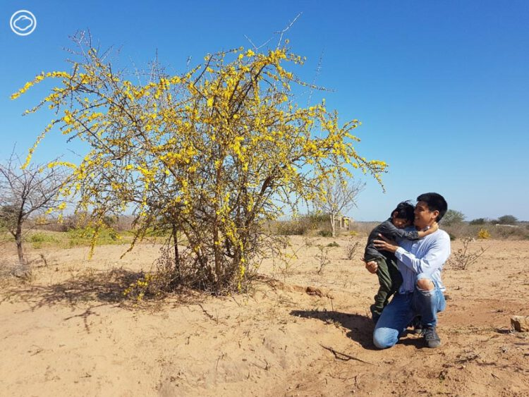 เที่ยวแอฟริกา แบบไม่ซ้ำใคร ขับรถไปตามหาต้นไม้ประหลาดข้างทาง, ต้นไม้ ทวีปแอฟริกา, อาทิตย์ ประสาทกุล