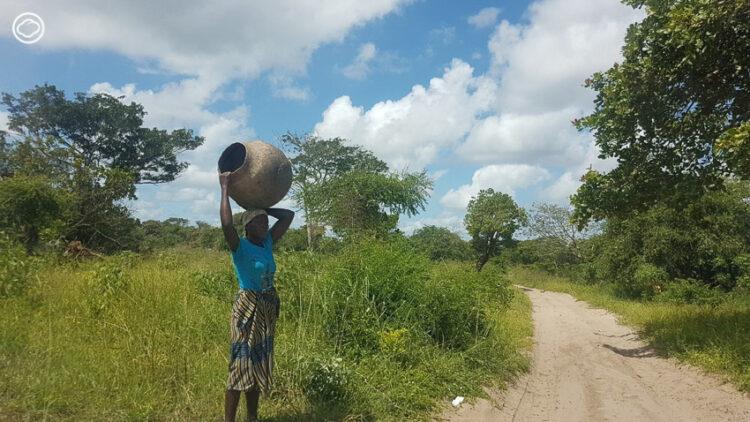 เที่ยวแอฟริกา แบบไม่ซ้ำใคร ขับรถไปตามหาต้นไม้ประหลาดข้างทาง, ต้นไม้ ทวีปแอฟริกา