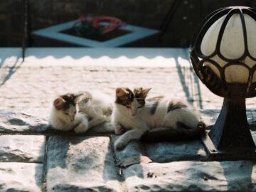 แอบมองแมวในตุรกี เมืองสองทวีปที่เป็น 'เมืองแมว' ผ่านภาพฟิล์มสี