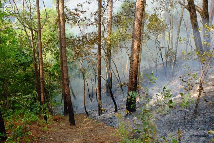 เรื่องเล่าจากบนดอยของปกาเกอะญอบ้านหนองเต่าที่รวมกลุ่มกันเข้าป่าไปเป็นนักดับไฟ, ไฟป่าภาคเหนือ