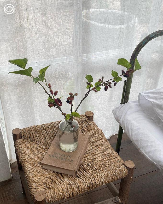 10 วิธีแต่งบ้านด้วยต้นไม้ ใบไม้ ดอกไม้ และผลไม้ ใกล้ตัว