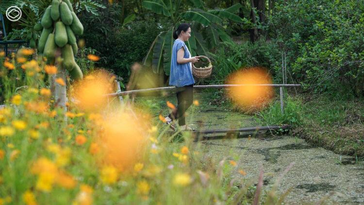 ชวนหยิบตะกร้าคล้องแขนข้ามท้องร่อง ไปเด็ดดอกไม้ในสวนมาเข้าครัวทำ 'สลัดดอกไม้'