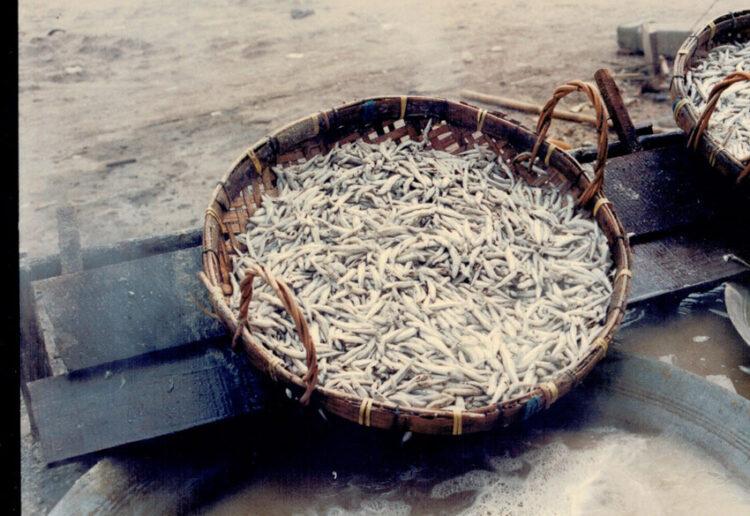 น้ำปลาแท้ตราสามกระต่าย, สามกระต่าย แบรนด์น้ำปลาโดยครอบครัวชาวประมงจากตราด ผู้พิถีพิถันปรุงน้ำปลาทุกหยด