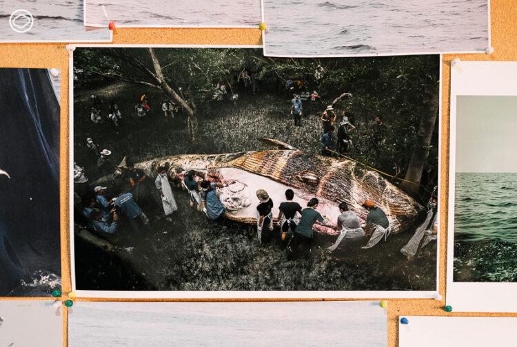 แดง-ชาญกิจ ชำนิวิกัยพงศ์, Film Factory, ThaiWhales, วาฬไทย