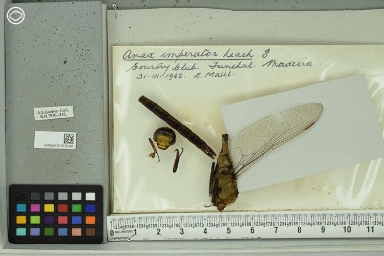 นักศึกษาป.เอก ผู้หาคำตอบเรื่องโลกร้อนด้วยการศึกษาแมลงปอใน Natural History Museum