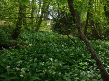 วิถีแม่บ้านอังกฤษช่วงกักตัว จ่ายกับข้าวในป่าแทนตลาด เก็บวัชพืชมาปรุงอาหารสร้างภูมิ, กิจกรรมช่วงกักตัว, covid-19