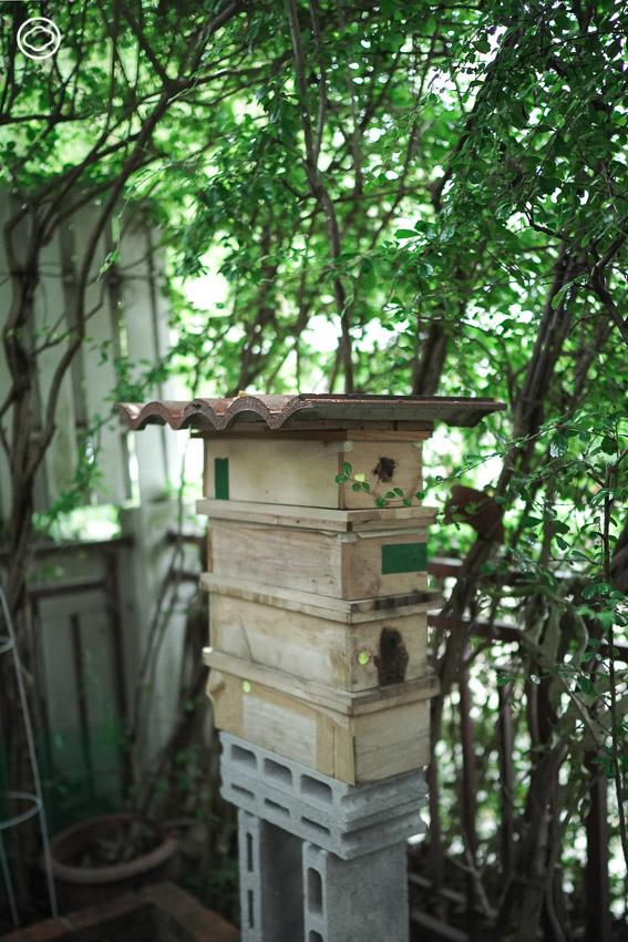 การเลี้ยงชันโรง, ชันโรงหรือผึ้งจิ๋ว สิ่งที่สวนในบ้านยุคใหม่ควรมี ไม่ต่อย ช่วยผสมเกสร และให้น้ำผึ้ง