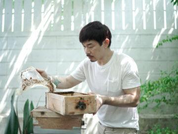 การเลี้ยงชันโรง, วิธีเลี้ยงผึ้ง, ชันโรง ประโยชน์