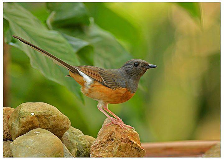 วิธีเรียกนกเข้าบ้าน ด้วยการเปลี่ยนบ้านเราให้กลายเป็นบ้านนก, แต่งบ้าน, จัดสวน, เรียกนก, สวนเรียกนก