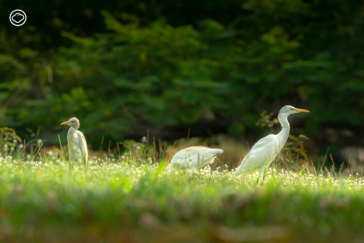เข้าสวนรถไฟ ทำความรู้จักสัตว์ในธรรมชาติด้วยการส่องนานานกประจำถิ่น, ส่องนก