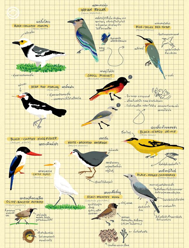 เข้า สวนรถไฟ ทำความรู้จักสัตว์ในธรรมชาติด้วยการส่องนานานกประจำถิ่น, ส่องนก