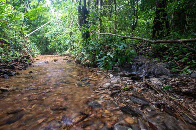 หมาดเย็น แสงกุล ชายผู้พลิกฟื้นผืนดินเป็นสวนป่าจากฝีมือมนุษย์แห่งเดียวของตรัง