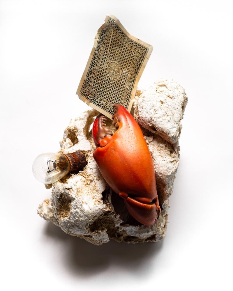 Eat Meets Waste ชุดภาพถ่ายทีสิส สะท้อนปัญหาขยะที่มีต่อชีวิตสัตว์ทะเล