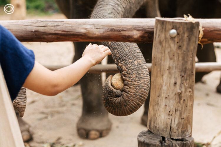 เดินเล่นและอาบน้ำช้าง ในปางช้างที่สนุกได้โดยไม่ต้องขี่เจ้าตัวโต, Elehant Haven Thailand, ปางช้างไทรโยค,ที่เที่ยว กาญจนบุรี